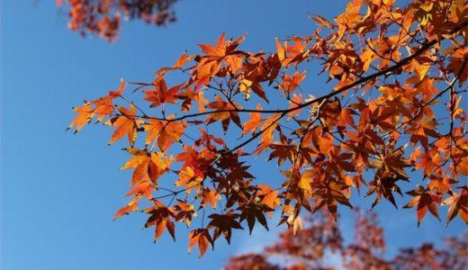鎌倉の紅葉!一眼レフで円覚寺と明月院が綺麗だったので撮ってみたよ